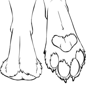 FootPaws.jpg